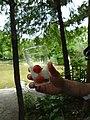 Summer at Japan - Tomatos + Ice (15714990752).jpg