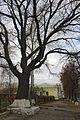 Sumy Petropavlivska oak.JPG