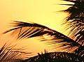 Sunset (463156741).jpg