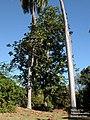 TARS6732-tree.jpg