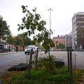 TV Eken 2011d.jpg