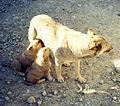 Tajikistan 1999 (438442418).jpg