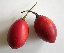 Cyfomandra grubolistna