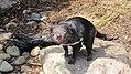 Taronga Zoo, Sydney (483450) (9440331603).jpg