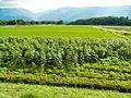 Tatsuzawa, Fujimi, Suwa District, Nagano Prefecture 399-0212, Japan - panoramio (9).jpg