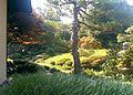 Tea Garden at Shofuso.jpg