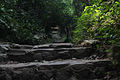 Terraced paths through the woods.jpg