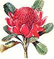 The Australian flora in applied art (1915) (14784165942).jpg