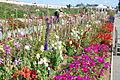 The Flower Fields at Carlsbad Ranch 9 2014-04-28.jpg
