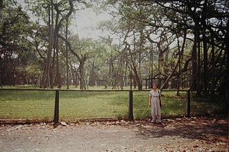 Cities and towns in West Bengal - The Great Banyan tree in Indian Botanical Gardens, Howrah