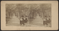 The Rambles, Central Park, New York, from Robert N. Dennis collection of stereoscopic views.png