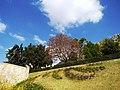 The Skanderbeg Monument in citycenter.jpg