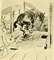 The horse and the war (1918) (14754486096).jpg