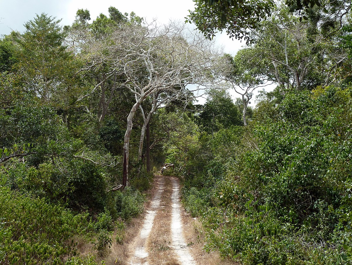 Arabuko Sokoke National Park - Wikipedia