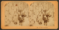 The wanderers return, from Robert N. Dennis collection of stereoscopic views.png