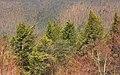 Timberline (2) (8629601485).jpg