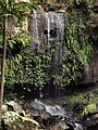 Timborine National Park (Curtis Falls 02).jpg