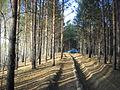 Timiryazevsky forest - panoramio.jpg