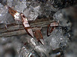 Titanite crystals on Amphibole - Ochtendung, Eifel, Germany