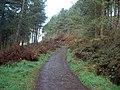 Track leading around Penycloddiau - geograph.org.uk - 624473.jpg