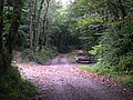 Track through Maddacleave Woods - geograph.org.uk - 332393.jpg