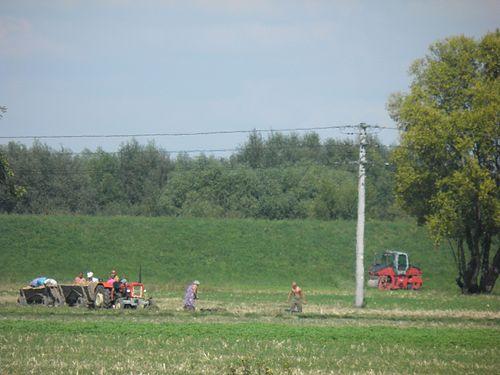 Traktor na polu podczas żniw.jpg