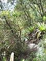 Trilha de acesso para escalada, Pedra da Cruz^ - panoramio.jpg
