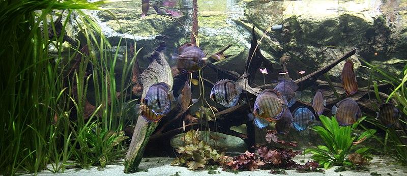 file tropical aquarium palais de la porte dor 233 e jpg wikimedia commons