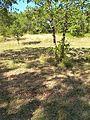 Truffière des Grèzes 04.jpg