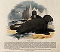 Two walrusses lying on a shore in a polar landscape. Coloure Wellcome V0020533.jpg