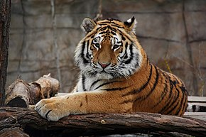 sites de rencontres de tigres Basketball site de rencontres