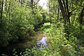 Ufer eines Zulaufs der Möhlin.jpg