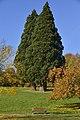 Un banc près des trois séquoias (22848862846).jpg