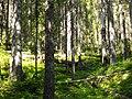 Vällingsjö urskog - mer skog.JPG