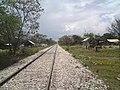Vías del Ferrocarril.jpg