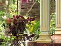 Vietnam 08 - 092 - my homestay (3184048235).jpg