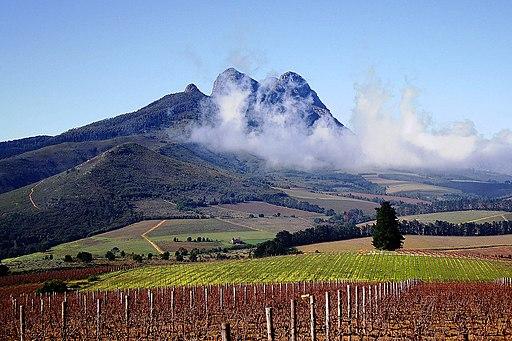 Vignoble de la Delvera Farm à Stellenbosch
