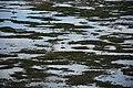Vlieland shore at low tide (Netherlands 2015) (19636600044).jpg