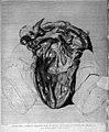 W. Hunter, Anatomia uteri humani gravidi... Wellcome L0030026.jpg
