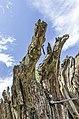 Waldmenschen Skulpturenpfad (Freiburg) jm9945.jpg