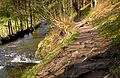 Wanderweg im Nationalpark Eifel.jpg