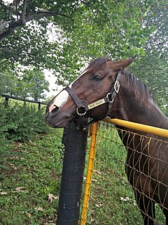 War Front (horse) American-bred Thoroughbred racehorse