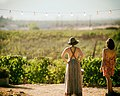 Watching the Mogor vineyard (Unsplash).jpg