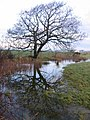 Waterlogged Field Edge - geograph.org.uk - 353565.jpg