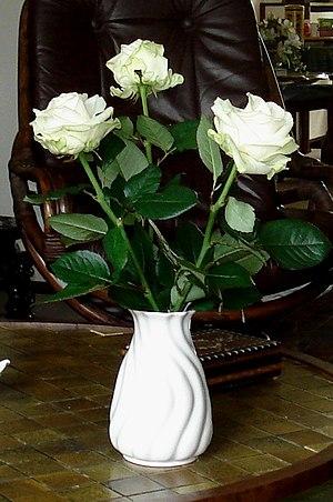 Fine white rose in vase