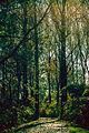 Wierbina - las otaczający meandry Odry.jpg