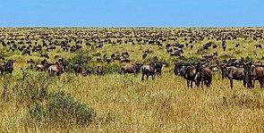 Desertification - Wikipedia