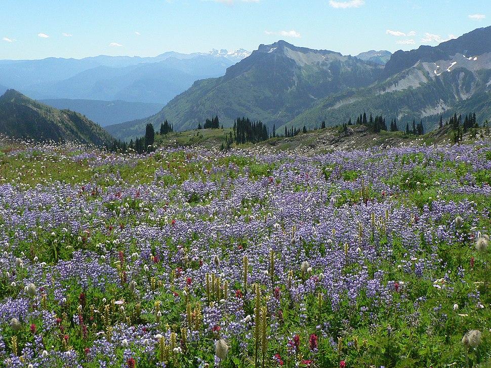 Wildflower Meadow (6997737191)