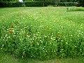 Wildflower meadow in Manor Park (geograph 3015142).jpg