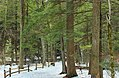 Winter Walk (5) (16836719202).jpg